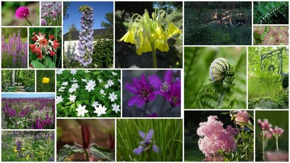 idé collage naturträdgård