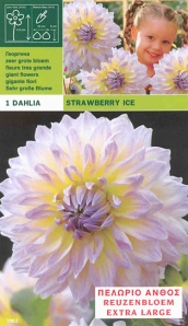 dahlia-dinnerplate-strawberry-ice-per-1-6000001962-1