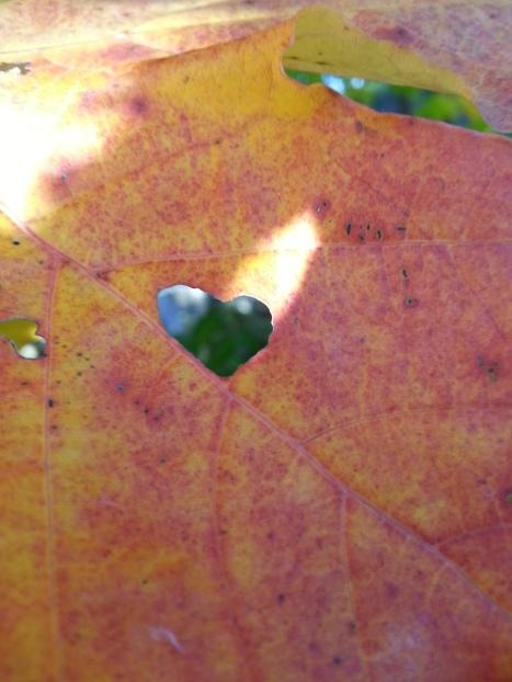 hjärtanblad