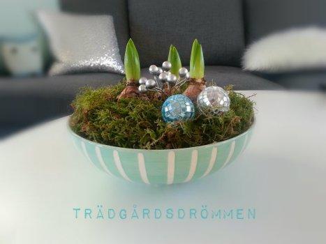 hyacint turkos