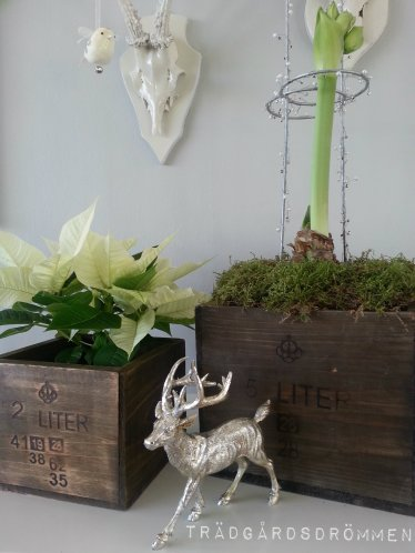 trämått med julblomma